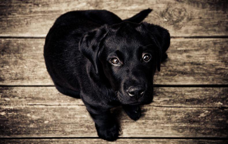 7 benefícios da convivência com cães